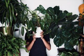 augalas
