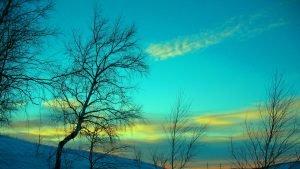 grazus-zydras-dangus