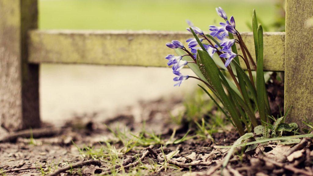 pavasarines-geles