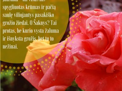 Ne veltui rožė - meilės gėlė