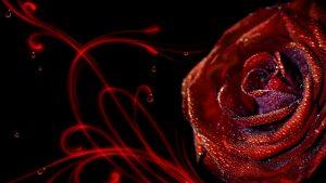 roze-su-lasais