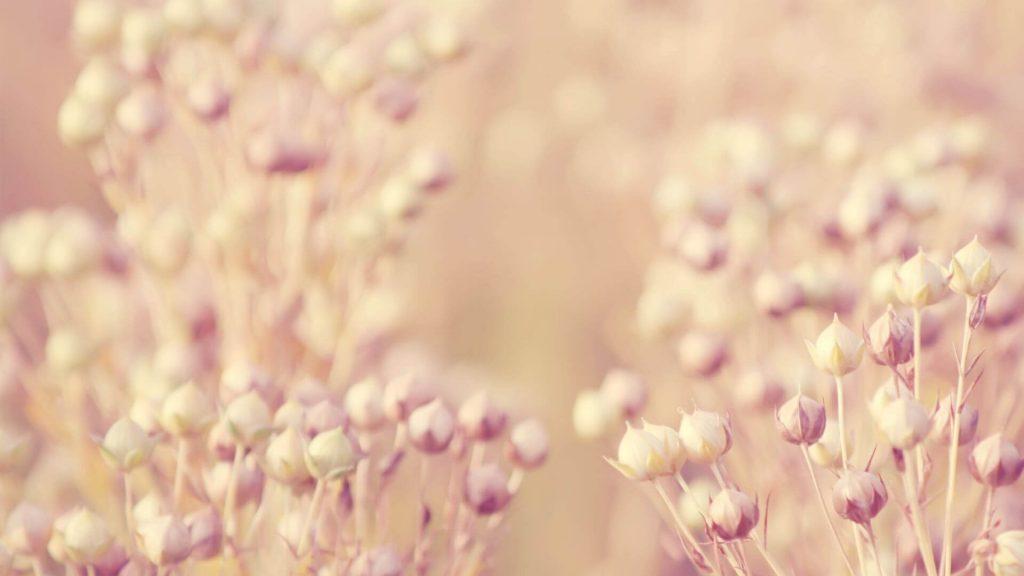 sausi pasteliniai ziedukai