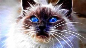 zydros-katino-akys
