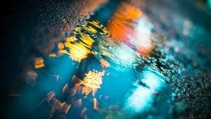 atspindys-pelkeje