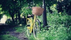 dviratis-su-krepseliu