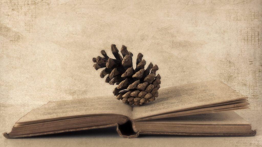 kankorezis-ant-knygos