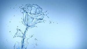 roze-is-vandens
