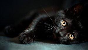 juoda-katyte